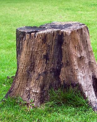 Tree-Stump-1.jpg