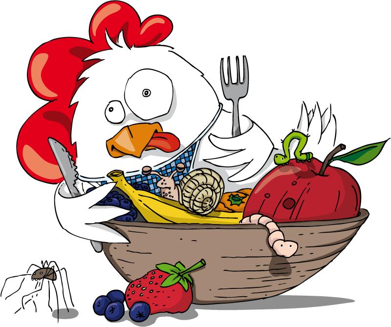 Biofutter für gesunde Hühner
