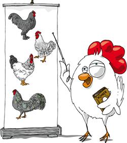 Lehrtafel Hühnerrassen