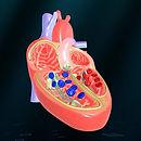 Heart - An incredible pump.jpg