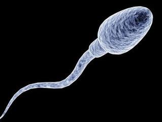Acupuntura e a infertilidade masculina