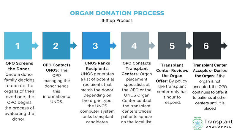 The main steps to the organ donation process.