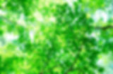 PAK86_miagerebamidori1226.jpg