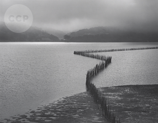 Ansel Adams, Oyster Fence