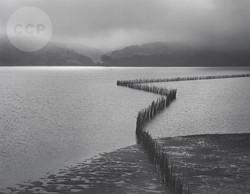 Ansel Adams, Oyster Fence