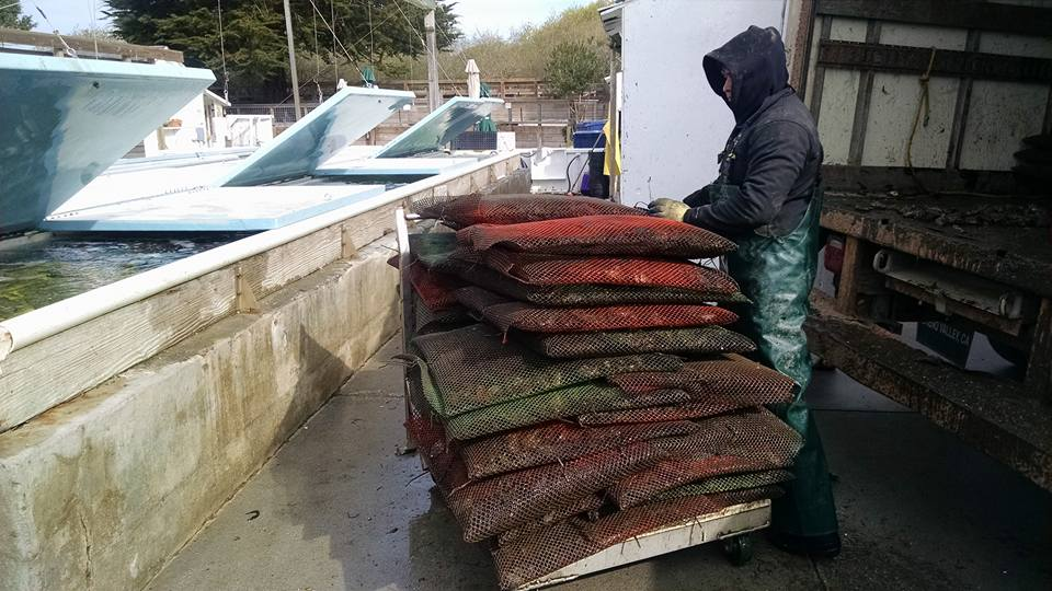 unloading a harvest