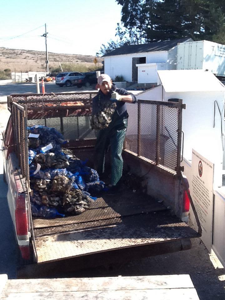 unloading a sorted harvest