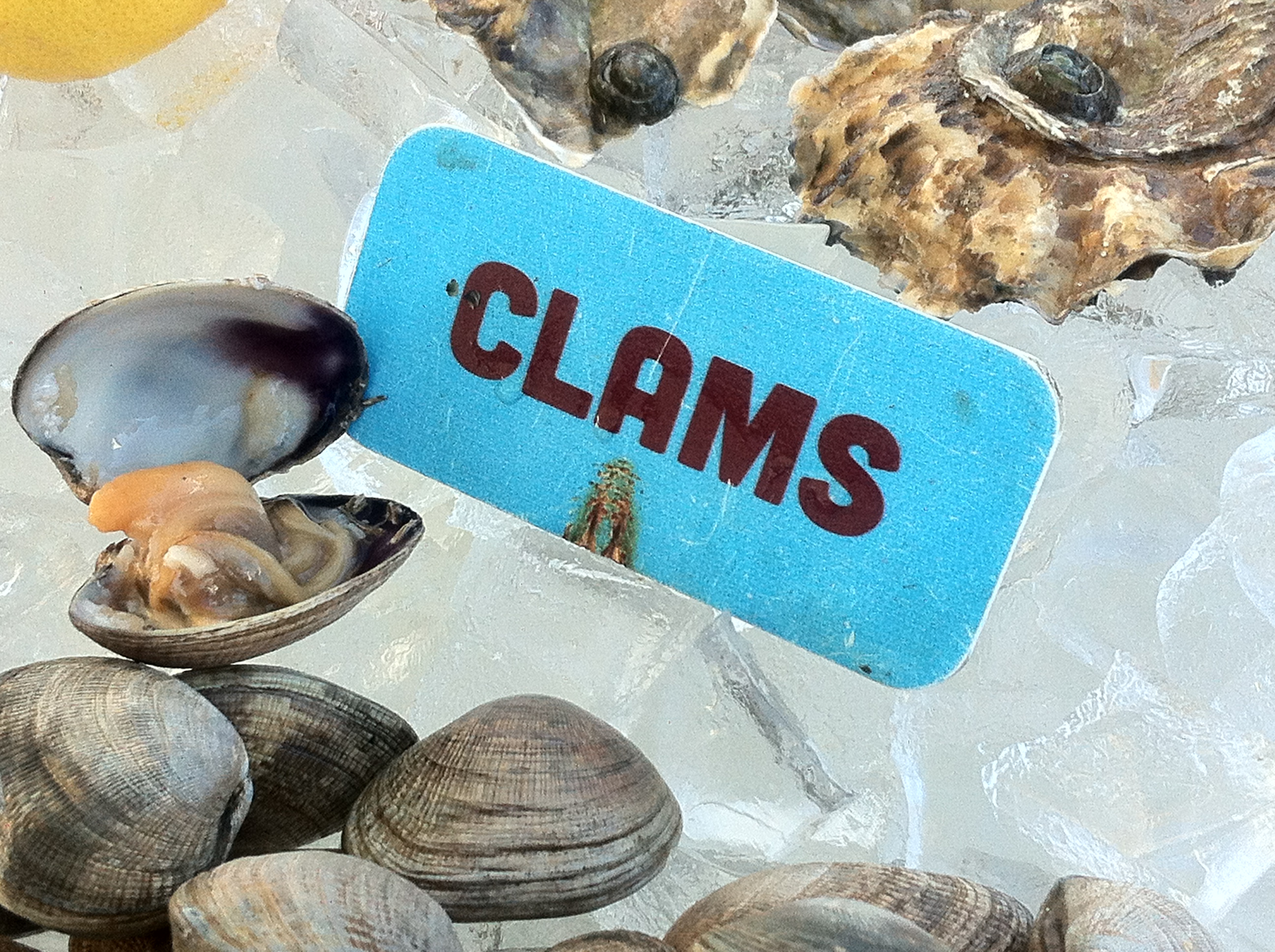 Manila Clam on the half-shell