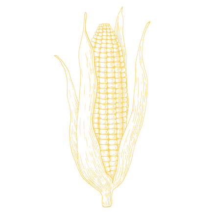 marias corn yellow-01.png