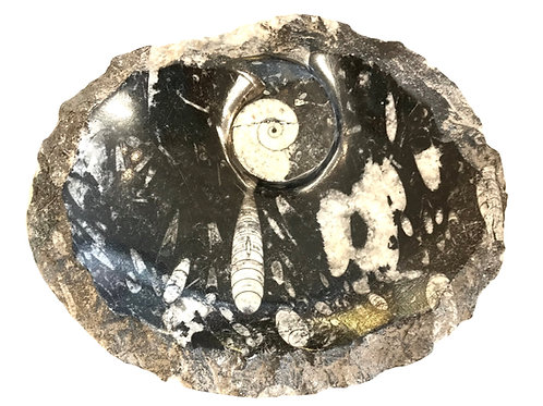 Fossil Dish