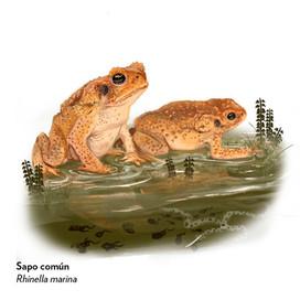 Proceso_Ilustraciones_Biodiversidad_de_M