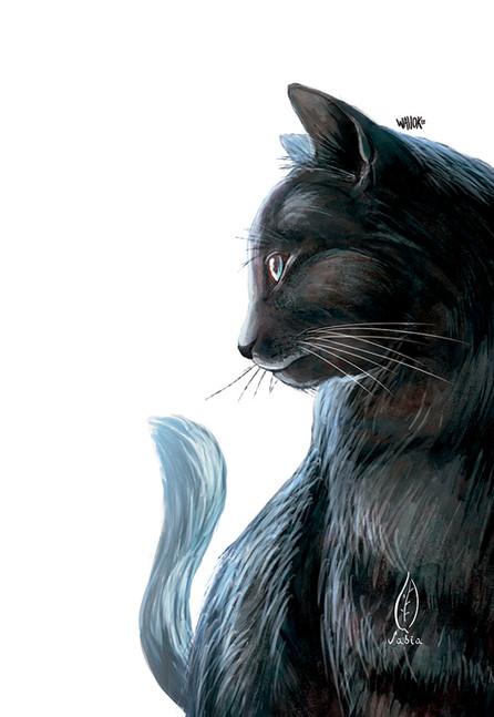 gato engro.jpg