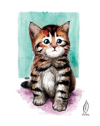 gatito.jpg