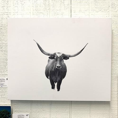 Wendy Jackson Photography on Canvas - Longhorn