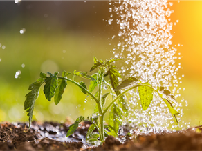 A 5-Step Process for Preparing Your Soil