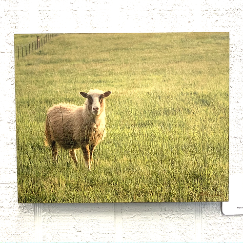 Wendy Jackson Photography on Wood - Sheep