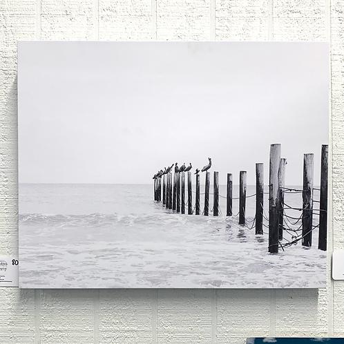 Wendy Jackson Photography on Canvas - Seagulls