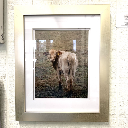 Wendy Jackson Photography Framed - Cow