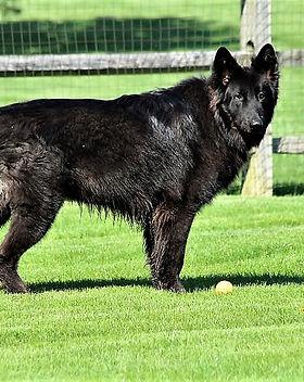 Wolfie 1 yr pic.jpg