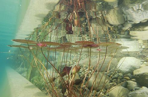 underwater-1529213_1920.jpg