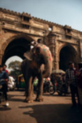 Elephant-Inde-en-plein-milieu-de-la-rout