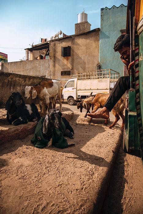 Indien-assis-dans-le-tuktuk-au-téléphone