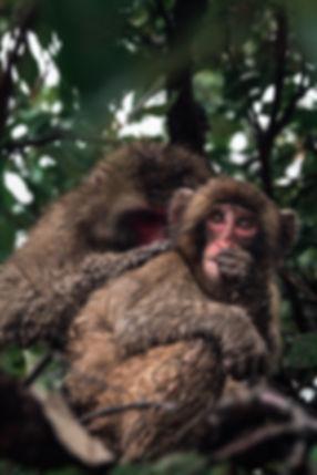 Monkey-kyoto.jpg