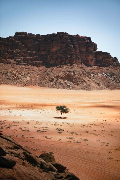Arbe-au-milieu-du-desert-wadi-rum-jordan