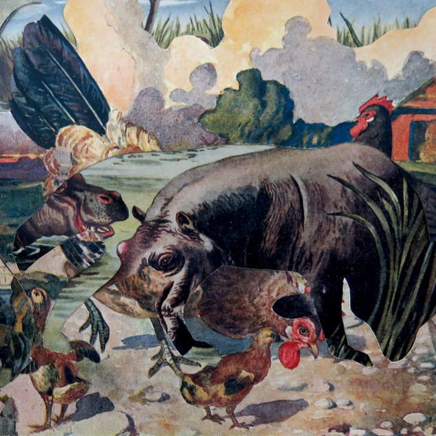 hipopotamo.jpg