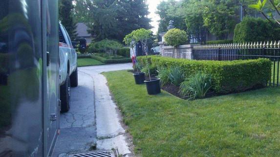 tree installation spring clean up legend