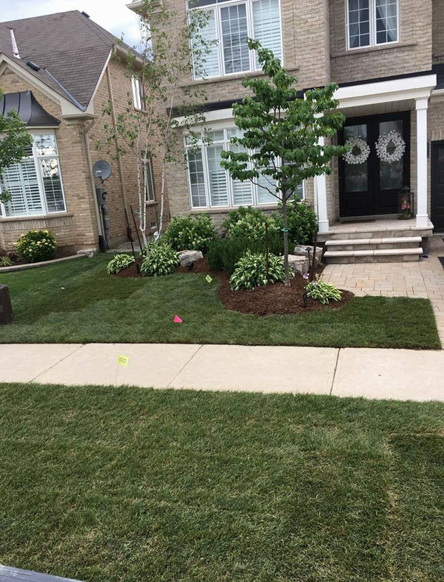 simple front yard landscaping clean up o