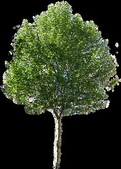 Legendary Landscapes Tree