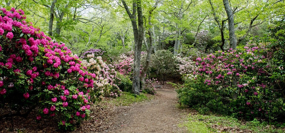True or false: Rhododendrons prefer acidic to alkaline soil?