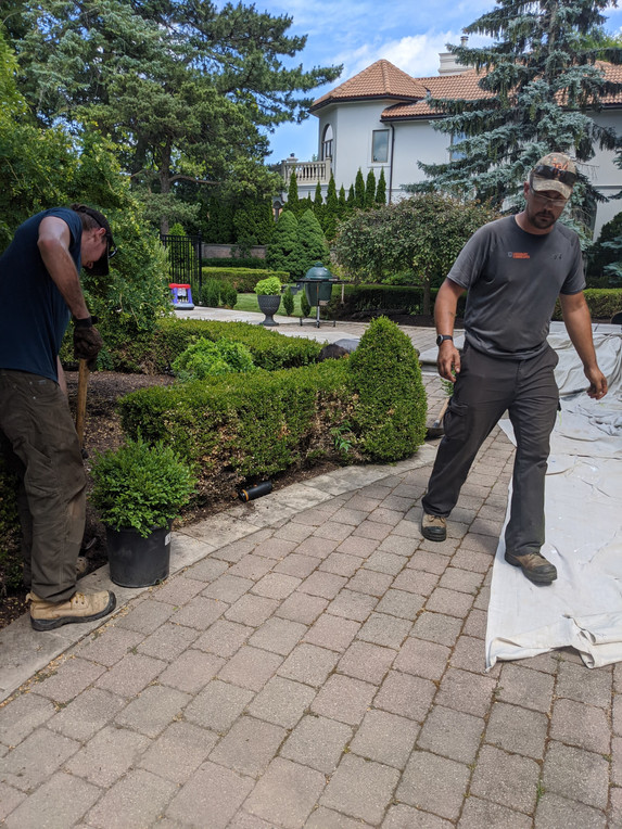 replacing boxwoods landscapers hamilton