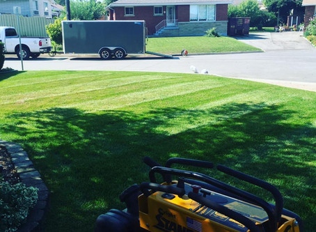 How to maintain a healthy lawn in seven simple steps
