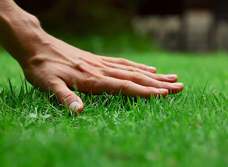Where To Start - Establishing Your Lawn