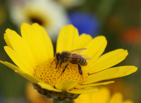 WHY DO BEES MATTER?