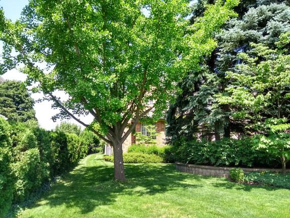 legendary landscapes landscaping company