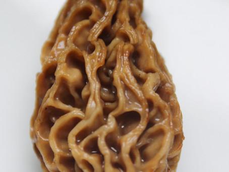 Morchel-Gemüse-Lasagne schnelle, vegetarische Art