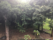 The little patch of forest in the backyard