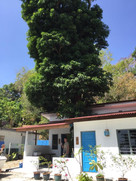 Teriang Blue Cottages.JPG