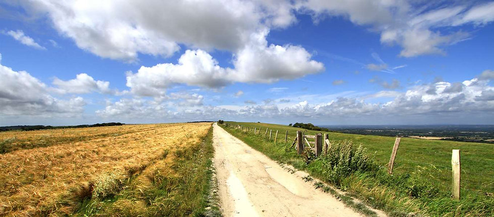 South Downs Way 3.jpg