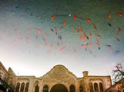 I pesci volanti di Kashan