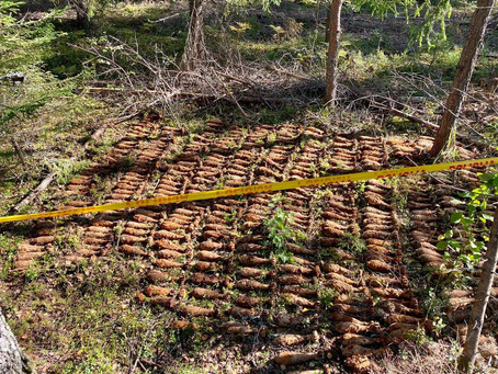 Forest Cleared: 340+ Mortar Rounds destroyed