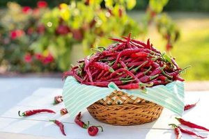 Peppers Health Benefits