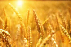 Health Benefits Of Grains