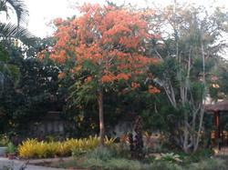 foto jardim
