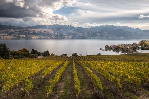 Qails' Gate Winey Vineyads