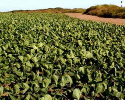 random cabbage patch
