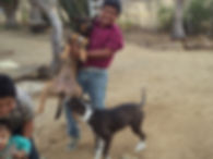 Dogs and kids in garden todos santos
